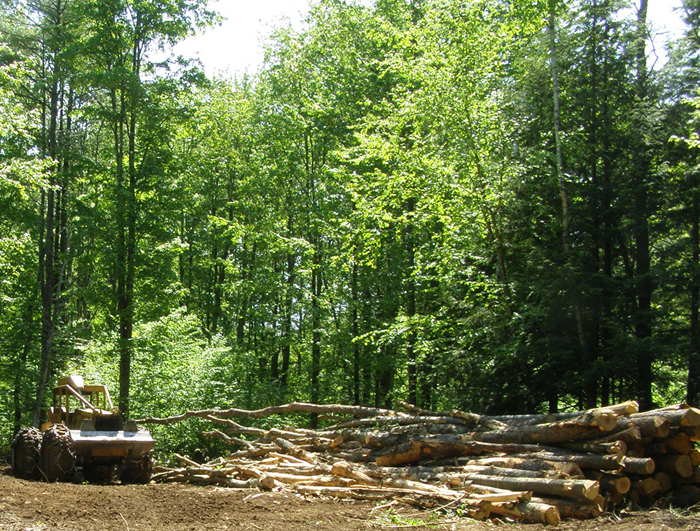 About Timber Stand Improvements Tsi Logging New Hampshire